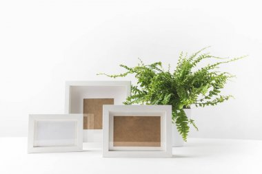 beautiful green potted fern and empty photo frames on white