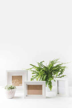 beautiful green potted plants and empty photo frames on white