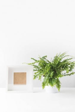 beautiful green potted fern and empty photo frame on white