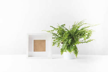 beautiful potted fern and empty photo frame on white