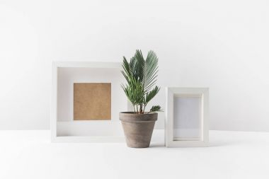 beautiful green potted plant and empty photo frames on white
