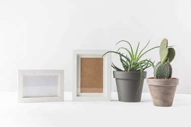 green succulents in pots and empty photo frames on white