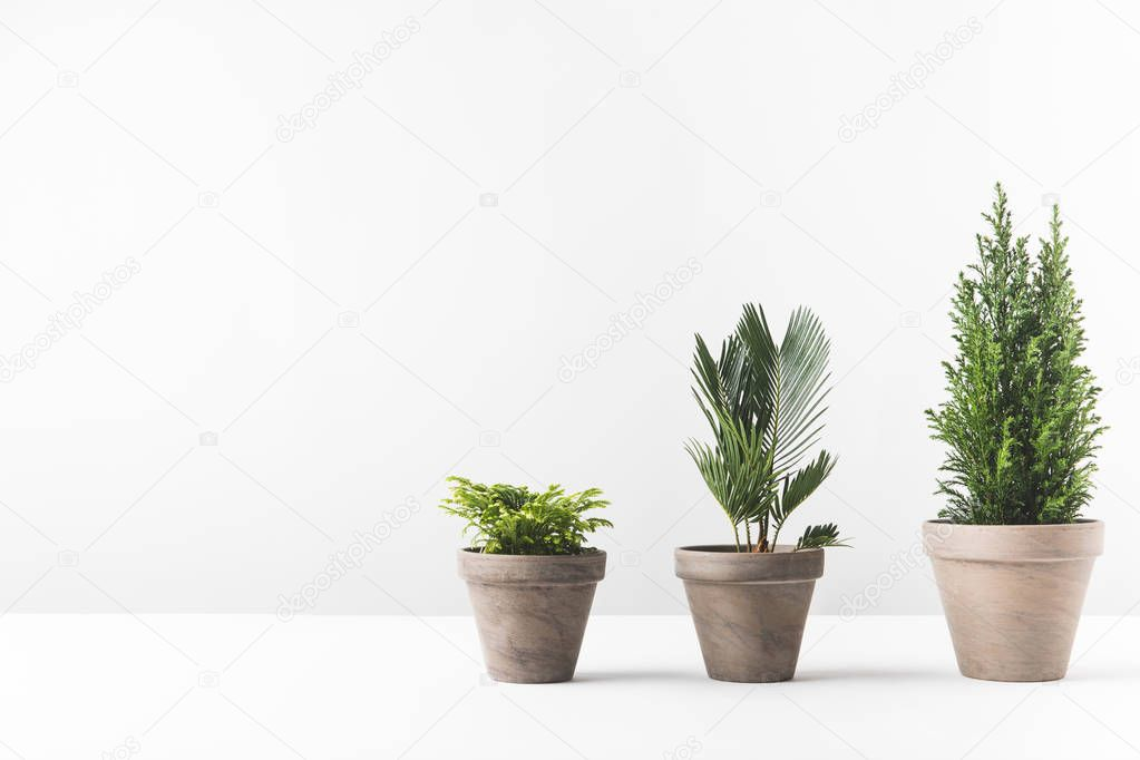 beautiful green home plants growing in pots on white
