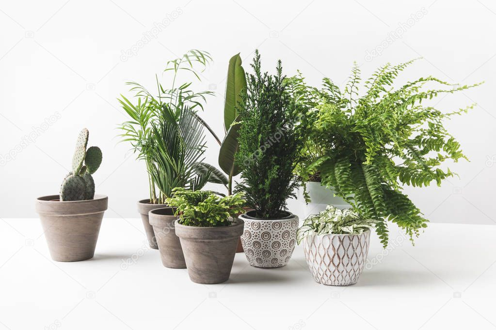 close-up view of various beautiful green houseplants in pots on white