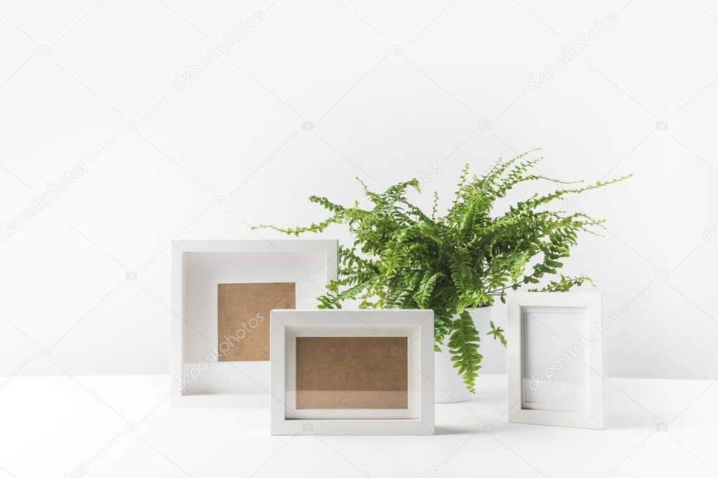 beautiful potted fern and empty photo frames on white