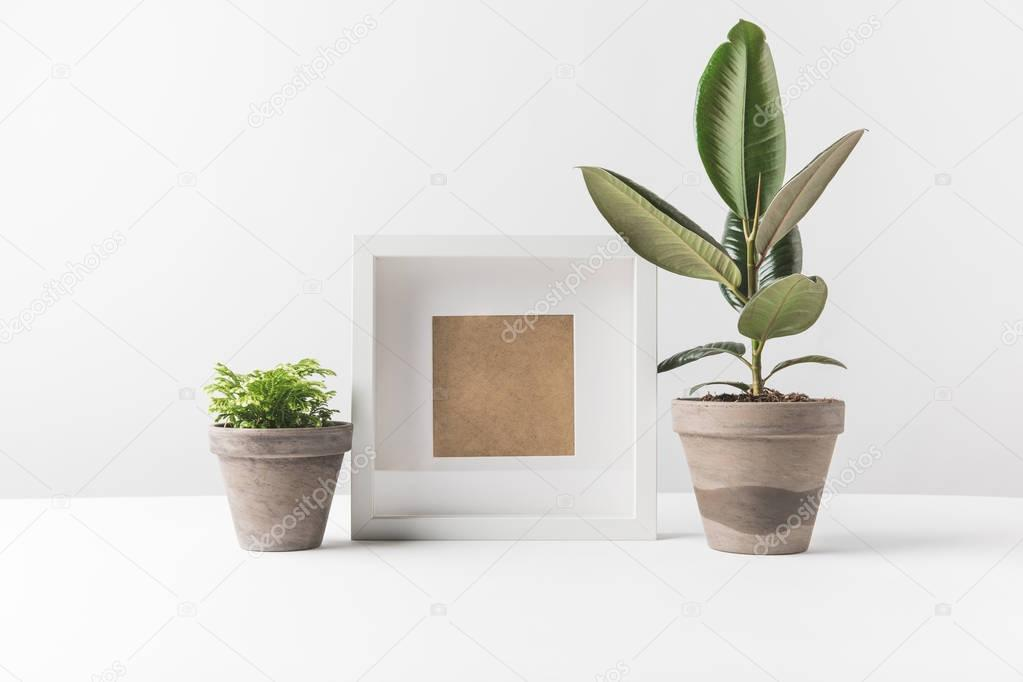 beautiful green potted plants and empty photo frame on white