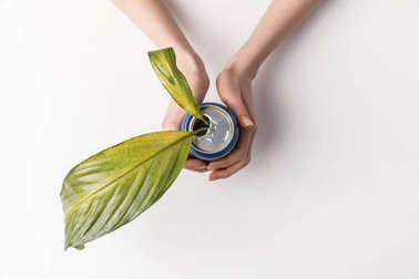 cropped shot of woman holding can with green leaves inside isolated on grey, reuse and environment concept