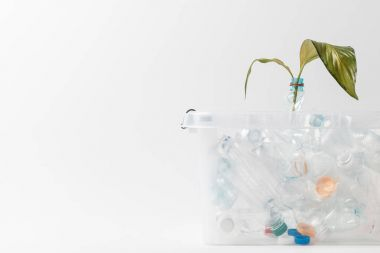 close up view of container with plastic bottles and green leaves isolated on white, recycling concept