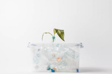 close up view of container with plastic bottles and green leaves isolated on grey, recycling concept