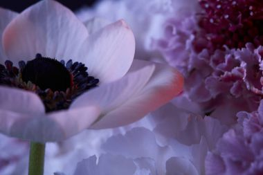 close up of white flowers with petals and stamens