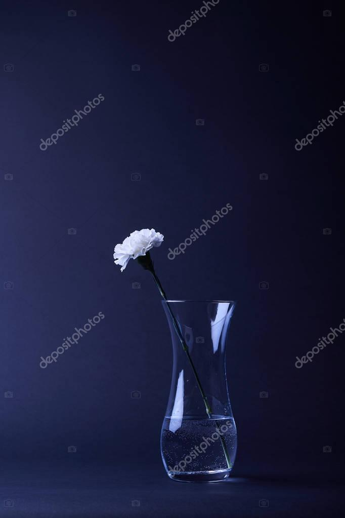 one white carnation flower in reflecting vase with water on dark