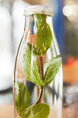 Green mint herb in glass bottle with water