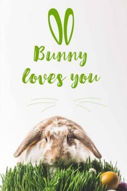 Rabbit looking at camera and sitting on grass with eggs and bunny loves you lettering