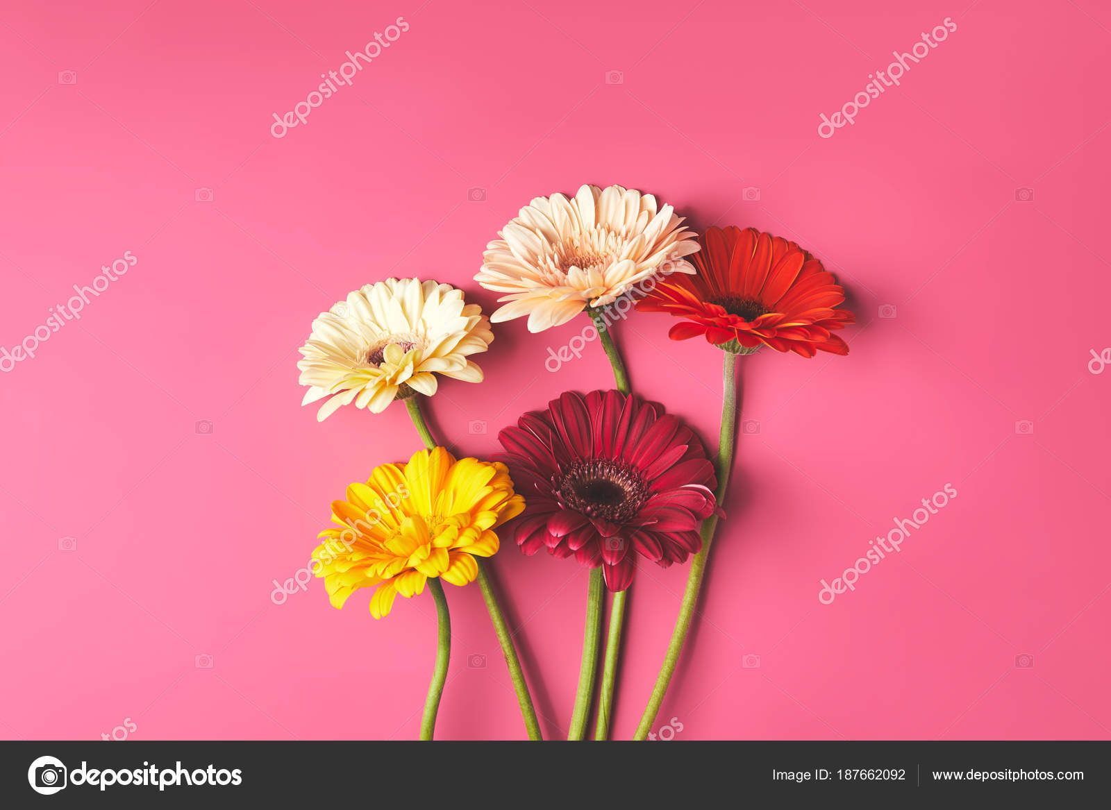 Top View Bunch Colorful Gerbera Flowers Pink Mothers Day Concept
