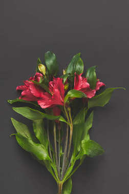 top view of Alstroemeria flowers bouquet on dark grey, mothers day concept
