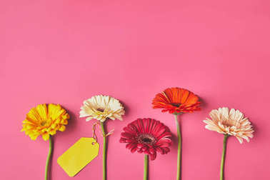top view of colorful Gerbera flowers in row with blank tag on pink, mothers day concept