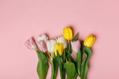 Tender blooming tulips isolated on pink background stock vector
