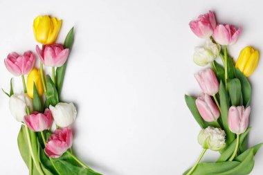 Tender spring tulips isolated on white stock vector