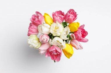 Tender spring tulip flowers isolated on white