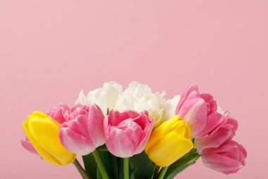 Tender blooming colorful tulips isolated on pink background