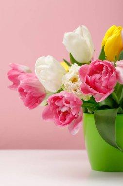 Tender blooming tulips in vase on pink background stock vector