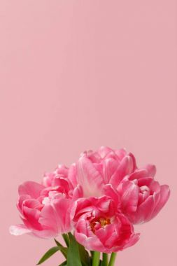 Bouquet of spring tulips isolated on pink background