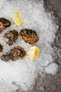 Delicacy fresh oysters with lemons chilled on ice
