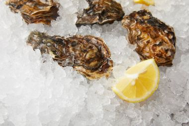 Cooled oysters refrigerated on ice with lemon