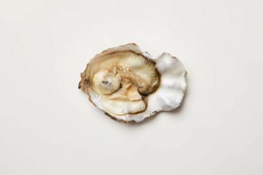 Open fresh oyster clam isolated on white