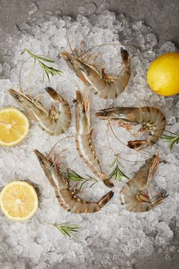 top view of raw shrimps with rosemary and lemon slices on crushed ice