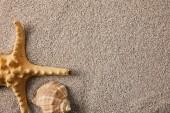 pohled shora uspořádány sea star a mušle na písku