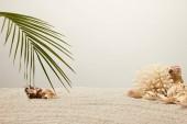 pohled uspořádány zelené Palmový list, korálů a mušlí na písku na šedém pozadí na plochu