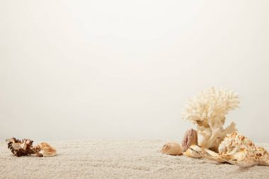 close up view of arranged coral and seashells on sand on grey backdrop