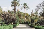 palermo, italien - 3. oktober 2019: grüne palmen im garten villa bonanno in der nähe von cattedrale di palermo