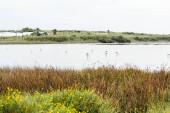 Fotografie divoké brodníky v jezeře u zelených rostlin a stromů