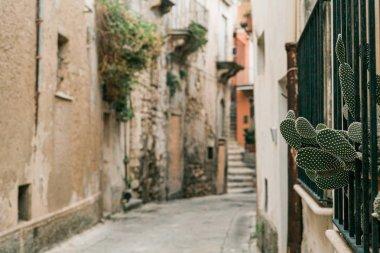 Selective focus of green cactus near narrow street in ragusa, italy stock vector