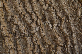 textured background of dark bark of tree with copy space