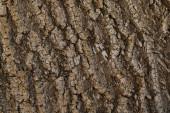 texturierter Hintergrund der dunklen Baumrinde mit Kopierraum