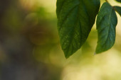 close up view of green and bright leaves outside