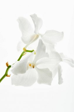Beautiful orchid flowers on branch isolated on white stock vector