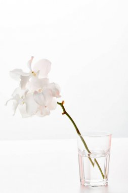 Natural beautiful orchid flowers on branch in glass isolated on white stock vector
