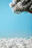 Fotografie spruce branches in snow on blue for christmas background