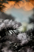 close up of spruce branches in snow with christmas lights bokeh