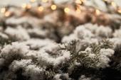 zblízka smrkových větví ve sněhu s rozmazanými vánoční světla