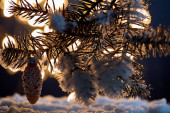 close up of spruce branches in snow with decorative pine cone and christmas lights bokeh at night