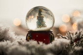 Fotografie christmas tree in snowball standing on spruce branches in snow with blurred lights