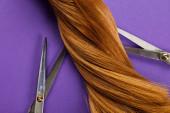 Horní pohled na zkroucené hnědé vlasy s nůžkami na fialovém pozadí