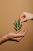 cropped view of man and woman holding green plant isolated on beige
