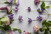 horní pohled na fialové a fialové květy na bílém pozadí