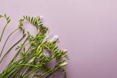 vrchní pohled na krásné květiny na fialovém pozadí s kopírovacím prostorem
